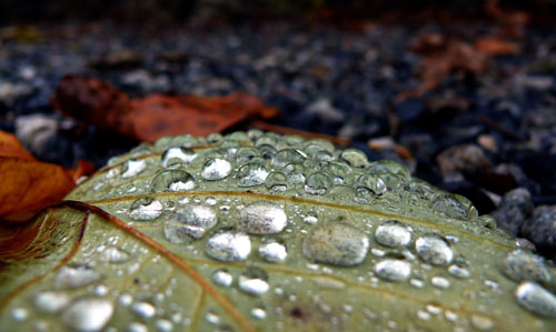 dew on a fallen leaf
