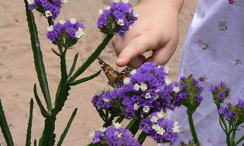 child's hand reaching for butterfly on flowers