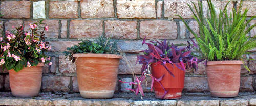 potted plants in a row