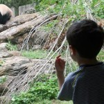 boy and zoo panda
