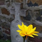 flower in front of tombstone