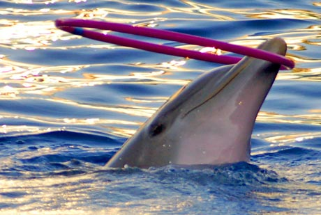 juggling dolphin