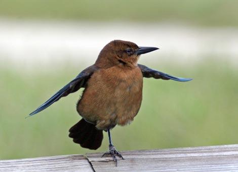 bird on one leg