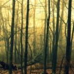 foggy Spring dawn