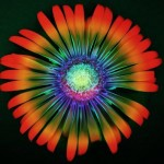 psychadelic flower