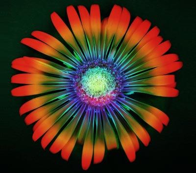 psychadelic flower