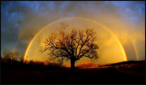 rainbow over tree