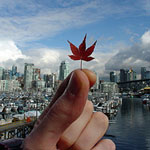 leaf and skyline
